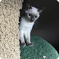 Adopt A Pet :: China 2 - Austin, TX