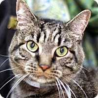 Adopt A Pet :: Ares - New York, NY