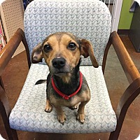 Adopt A Pet :: Chloe - Mebane, NC