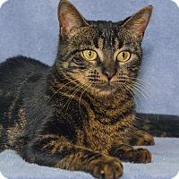 Adopt A Pet :: Eden - Elmwood Park, NJ
