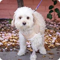 Adopt A Pet :: *Minmi Dinosaur -- BUMBLE'S BUDDY - Pittsburg, CA