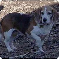 Adopt A Pet :: Mrs. Beasley - Waldorf, MD