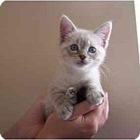 Adopt A Pet :: Katy - Irvine, CA