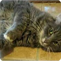 Adopt A Pet :: Harry - Plainville, MA