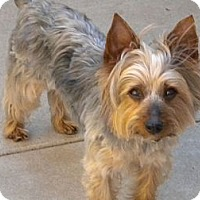 Adopt A Pet :: Sebastian - Orange County, CA