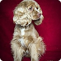 Adopt A Pet :: Katie - Rancho Mirage, CA