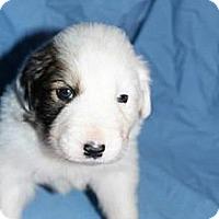 Adopt A Pet :: Finn - Stilwell, OK