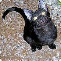 Adopt A Pet :: Tippy - Scottsdale, AZ