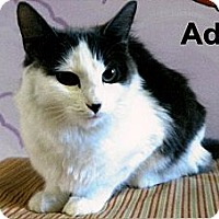 Adopt A Pet :: Addie - Medway, MA
