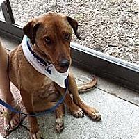 Adopt A Pet :: Captain Morgan - Plainfield, IL