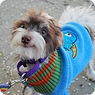 Adopt A Pet :: Zion