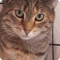 Adopt A Pet :: Carree - Colmar, PA