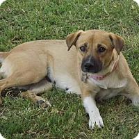 Adopt A Pet :: Annabelle - Phoenix, AZ