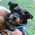 Adopt A Pet :: Esther ~B