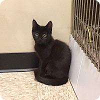 Adopt A Pet :: Robbie - Colmar, PA