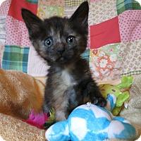 Adopt A Pet :: Sitka - Geneseo, IL