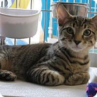 Adopt A Pet :: Hemlock - Raritan, NJ