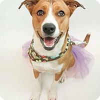 Adopt A Pet :: Lilly - Phoenix, AZ