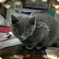 Adopt A Pet :: Kendal - Trevose, PA