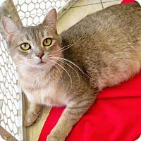 Adopt A Pet :: Misty - Umatilla, FL