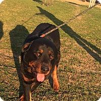 Adopt A Pet :: Stryker - Kaufman, TX