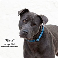 Adopt A Pet :: Slate - Wichita, KS