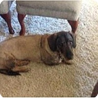 Adopt A Pet :: Charlie - Tucson, AZ
