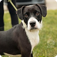 Adopt A Pet :: Diesel - ADOPTED! - Zanesville, OH