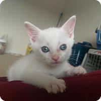 Adopt A Pet :: Ventus - Herndon, VA