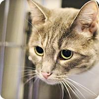 Adopt A Pet :: Rajya - Lincoln, NE