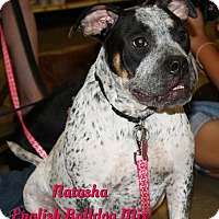 Adopt A Pet :: Natasha - Cheney, KS