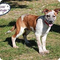 Australian Cattle Dog Puppy for adoption in Lee's Summit, Missouri - Ivan