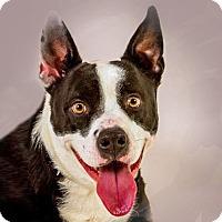 Adopt A Pet :: Oscar - Prescott, AZ
