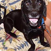 Adopt A Pet :: Daphne - Providence, RI