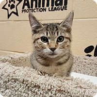 Adopt A Pet :: Izzy - Smithfield, NC