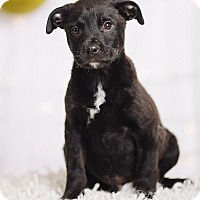 Adopt A Pet :: Professor X - Portland, OR