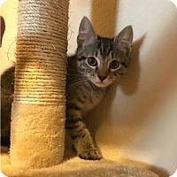 Adopt A Pet :: MICA - Plano, TX