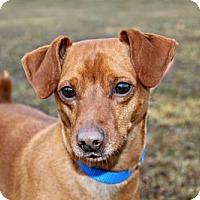Adopt A Pet :: Brownie - Dillsburg, PA