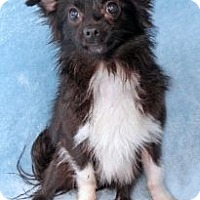 Adopt A Pet :: Sneaker - Encinitas, CA