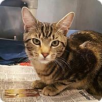 Adopt A Pet :: Dakota - Lafayette, NJ