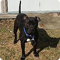 Adopt A Pet :: Montana - Cary, IL