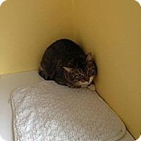 Adopt A Pet :: Dixie - Lancaster, MA