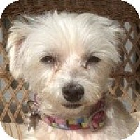 Adopt A Pet :: Trixie - La Costa, CA