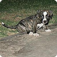 Adopt A Pet :: Margo - Mesa, AZ