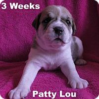 Adopt A Pet :: Jolene's Pup F5 - Patty Lou - Tampa, FL