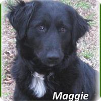 Adopt A Pet :: Maggie- Adoption Pending - Marlborough, MA