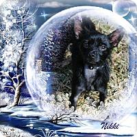 Adopt A Pet :: Nikki - Crowley, LA
