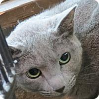 Adopt A Pet :: Maggie - Davis, CA