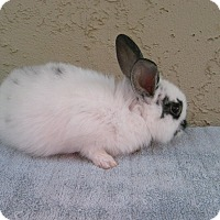 Adopt A Pet :: Christopher - Bonita, CA