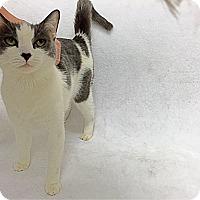 Adopt A Pet :: Lena - Mission Viejo, CA